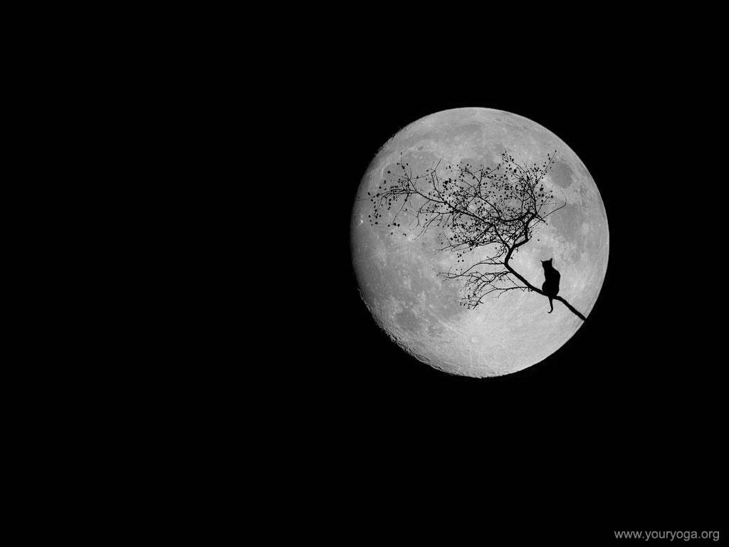фотообои луна: